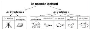 classification animaux